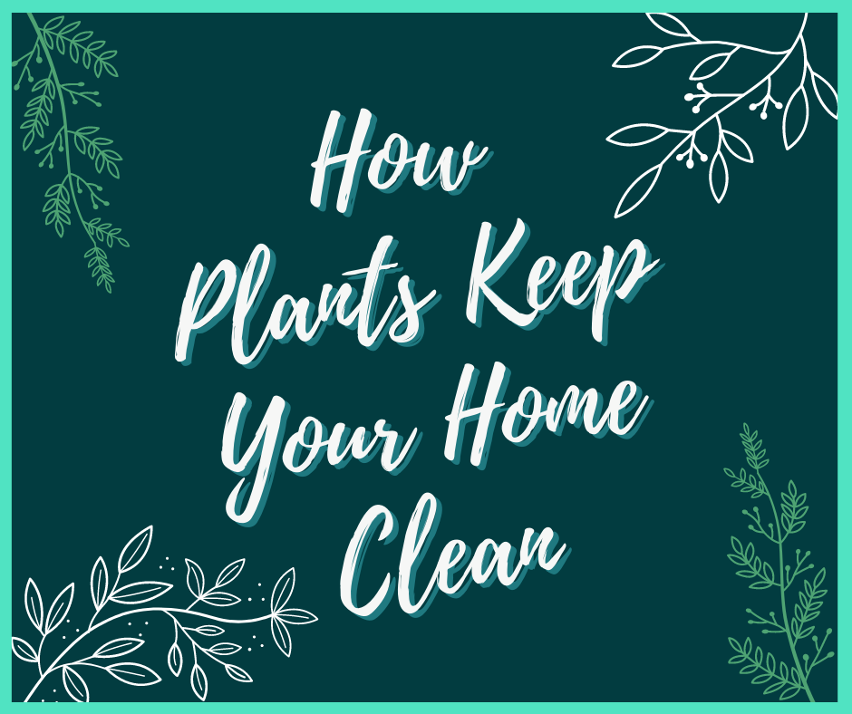 how plants keep your home clean